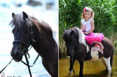 Выбор лошади: «Яша — наш милый мальчик»